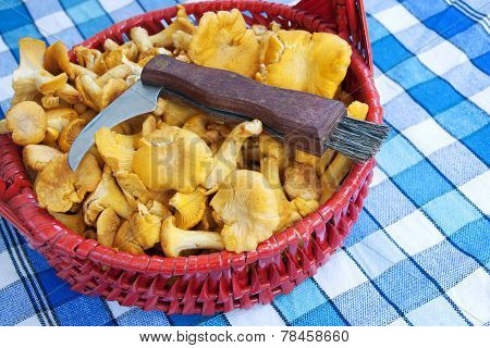 Mushroom Chanterelles