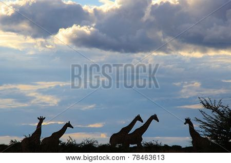 Giraffe Silhouette - Natural Blues from Africa