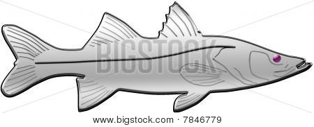 Chrome Snook Illustration