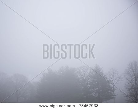 Foggy sky and trees