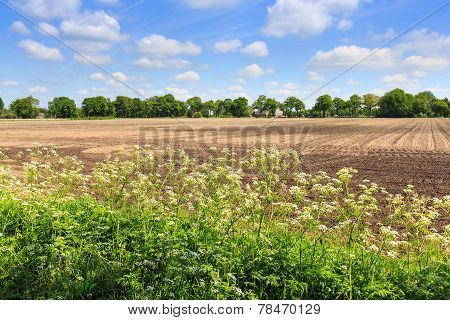Countryside Landscape With Weed And Cultivated Farm Field