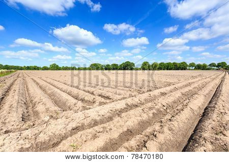 Landscape Of A Cultivated Farmers Field On A Sunny Day