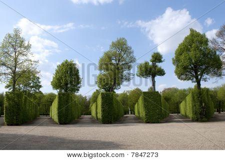 Garden Schonbrunn