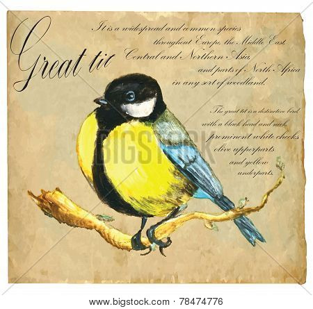 Hand Painted Illustration (vector), Bird: Tit
