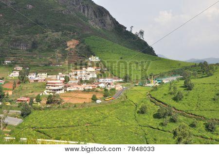 Tea Gardens, Ooty Resort, India