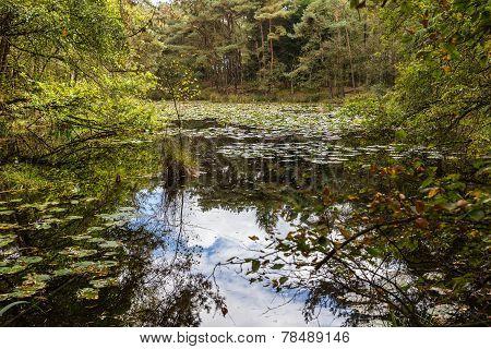 Hidden Lake In The Kampense Heide