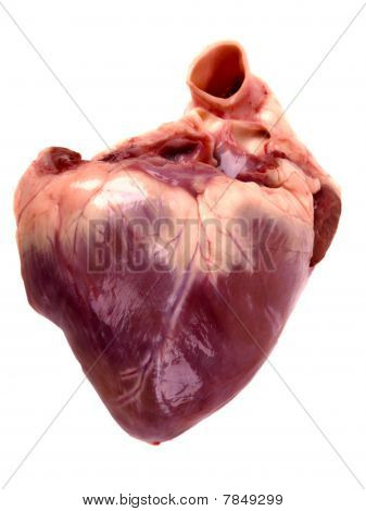 Pig Heart. Close Up On White Background
