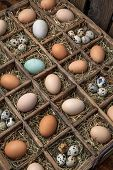 pic of quail egg  - Box with chicken - JPG