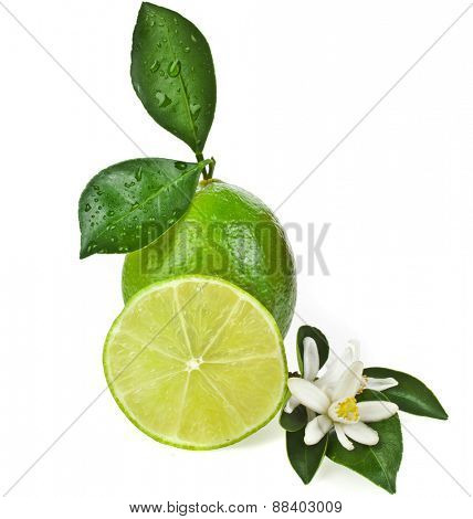 Lime citrus fruit with leaves close up isolated on white background