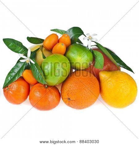 Beautiful citrus fruits of  lemon, orange, grapefruit , lime,  kumquat, isolated on white background