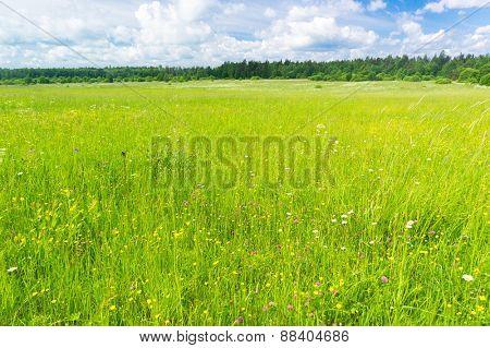 Growth Season Field Freedom