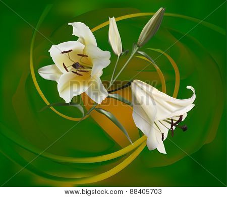 illustration with bunch of white lily flowers on green background