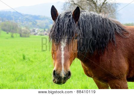 Brown Horse With A Black Mane