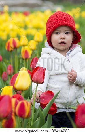 Adorable Toddler Girl Gathering Tulips