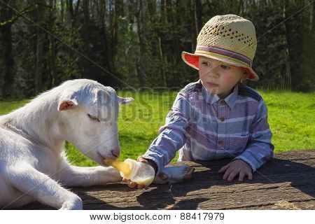 Little Boy And Little Goat