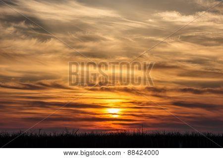 flying storks birds silhouettes on dramatic orange sunset background
