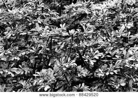 Abstract Black And White Leaves