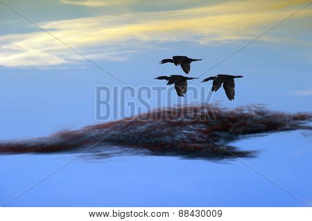 Birds Flying Closeup As A Flock With The Clouds