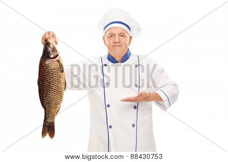 Mature chef holding a big freshwater fish and gesturing with his hand isolated on white background