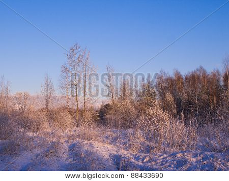 Forest glade before sunset in winter