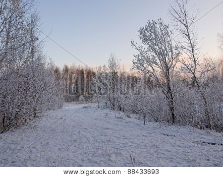 Winter alley in the woods