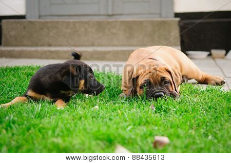 Two Little Puppies