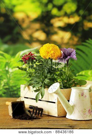 garden flowers, tools (rake, shovel, watering can)