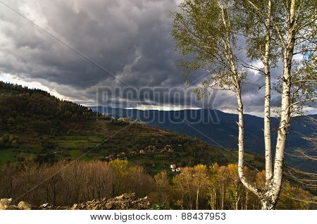 Illuminated birch tree against dark clouds before a storm on Radocelo mountain