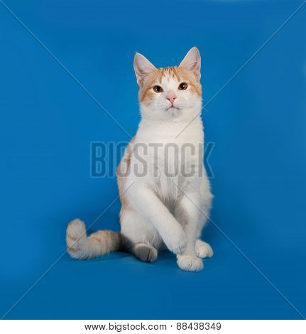White And Red Kitten Sitting On Blue