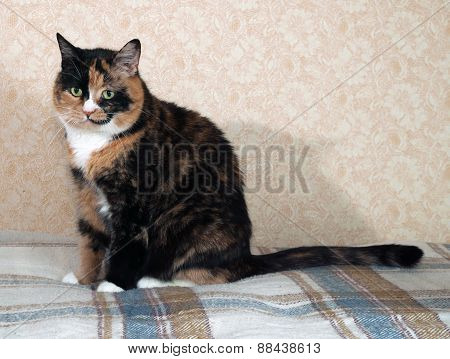 Tricolor Cat Sitting On Blanket