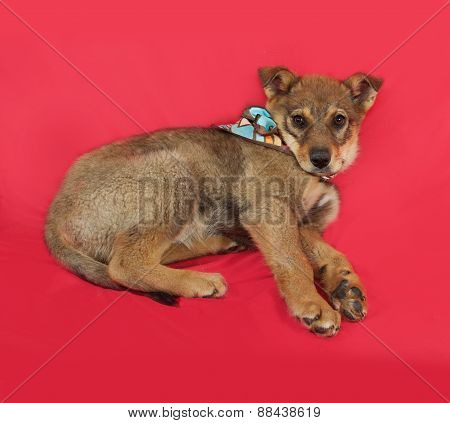 Little Yellow Puppy Lies On Red