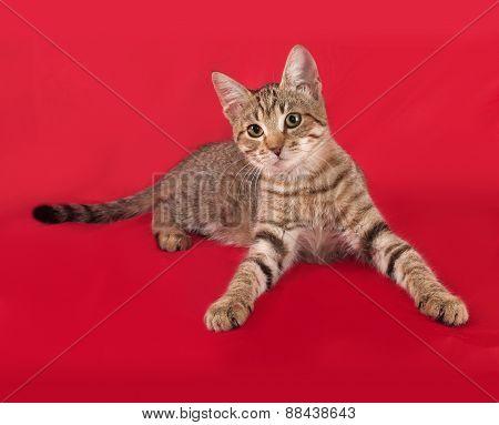 Striped Kitten Lying On Red