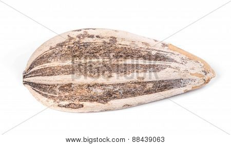 Close up of sunflower seed.