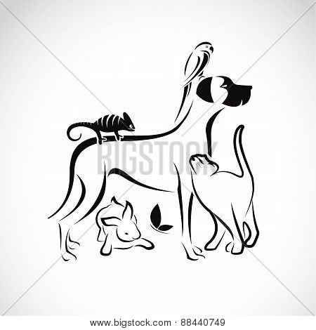 Vector Group Of Pets - Dog, Cat, Parrot, Chameleon, Rabbit, Butterfly Isolated On White Background