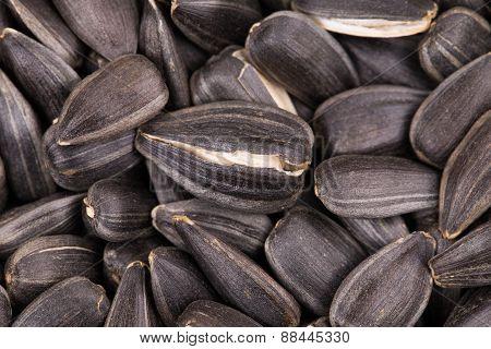 Sunflower seeds close up.