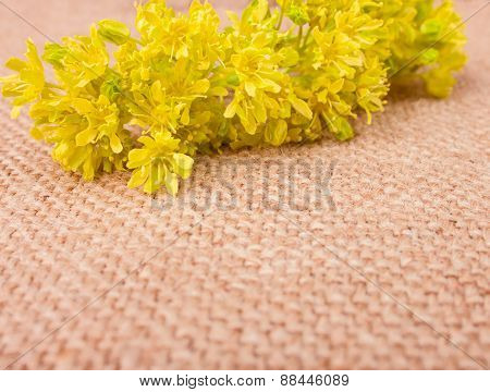 Fragile Spring Yellow Flowers On The Sackcloth