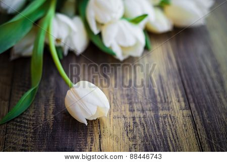 Art Abstract Background Spring Tulips Wooden Design