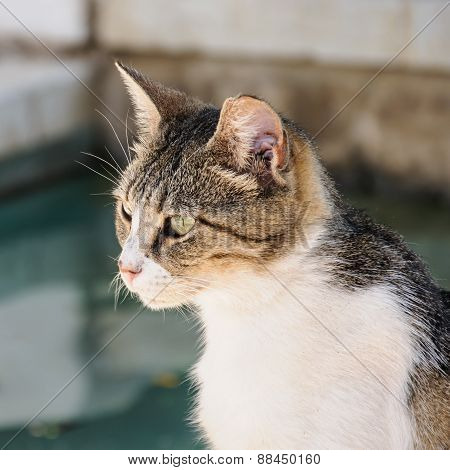 A Profile View Of A Cat