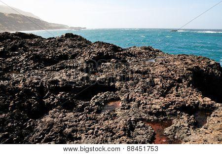 Oceanfront Landscape