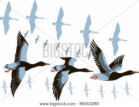 Wild Geese In Flight.eps