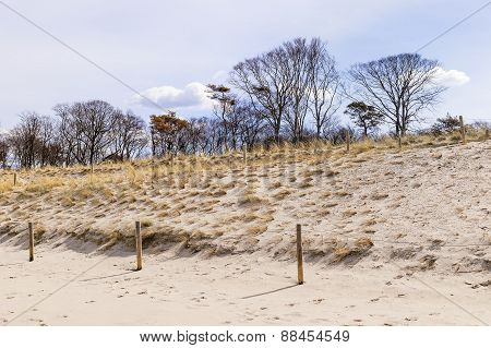 Sand, Dunes And Trees