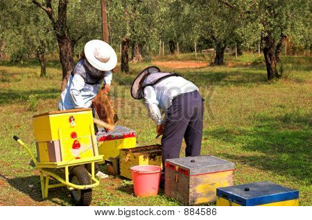 Bee Boxes And  Bee Keepers 2