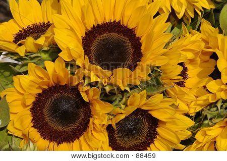 Korb mit Sonnenblumen
