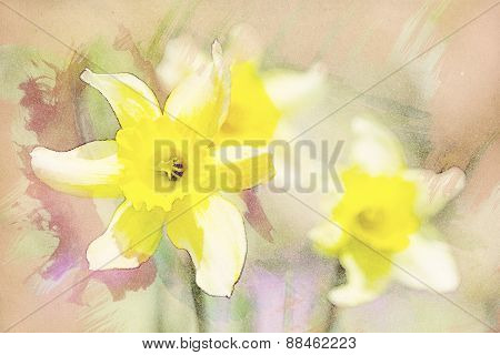 Spring Daffodils In Garden, Vintage Watercolor Effect