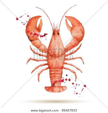 Watercolor Lobster.