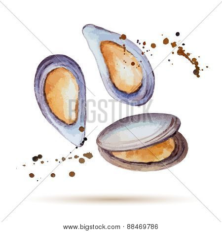 Watercolor Mussels