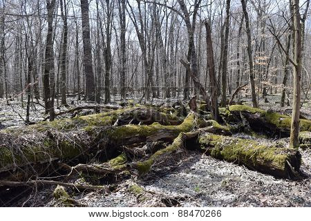 moss covered fallen trees