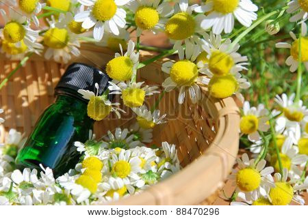 essential oil with chamomile