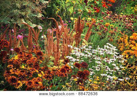 Summer Garden Full Of Flowers