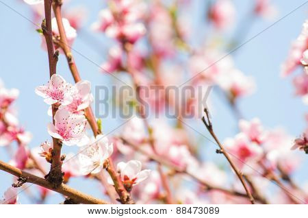 Flowering branches with sky in the background